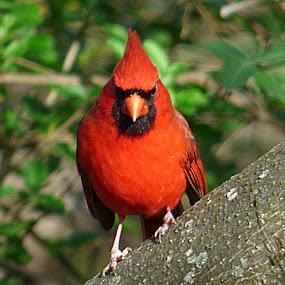 MAD BIRD by Larry Moore - Animals Birds (  )