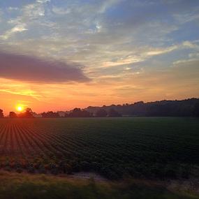 delta sunrise by Richard Wright - Instagram & Mobile iPhone ( delta, sunrise, mississippi,  )