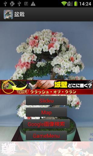 盆栽 JP034