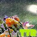 live rain wallpaper icon
