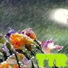lluvia lwp icon