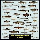 UK FRESHWATER FISH icon