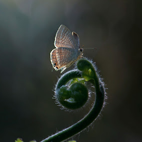 feel alone... by Casper Prie - Animals Insects & Spiders
