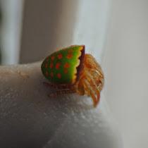 Arachnids of Ecuador