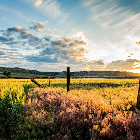 Wheat of Montana by Will Ballew - Landscapes Sunsets & Sunrises ( farm, wheat, clouds, fence, billings, big sky, montana, sunset, mt, crop )