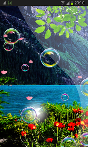 Poppy Flower n Bubbles HD