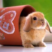 Cute Animal Wallpaper 7