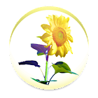 Sunflower - Weather map icon