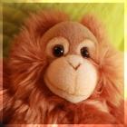 Monkey Forecaster icon