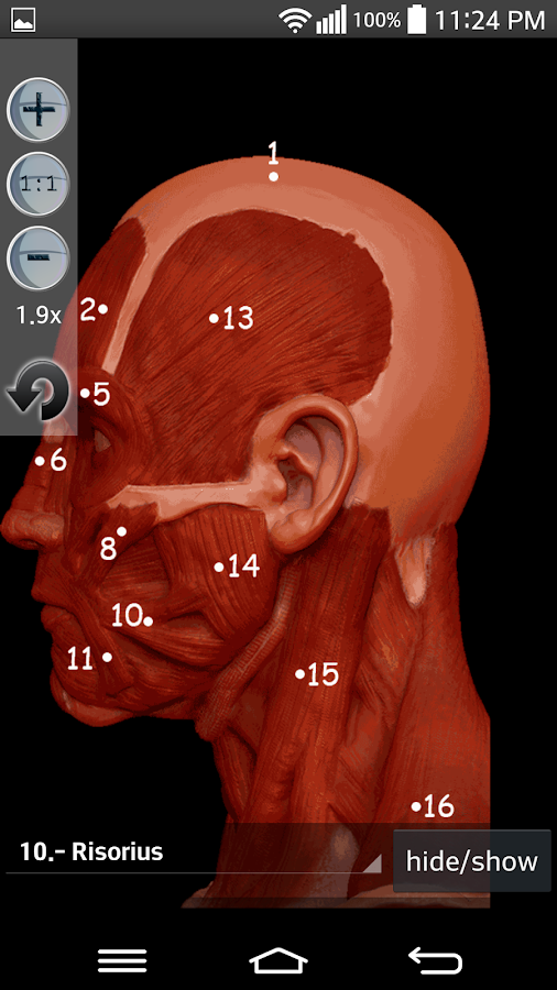 Anatomy Muscles: captura de tela