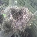 Unsure of bird species