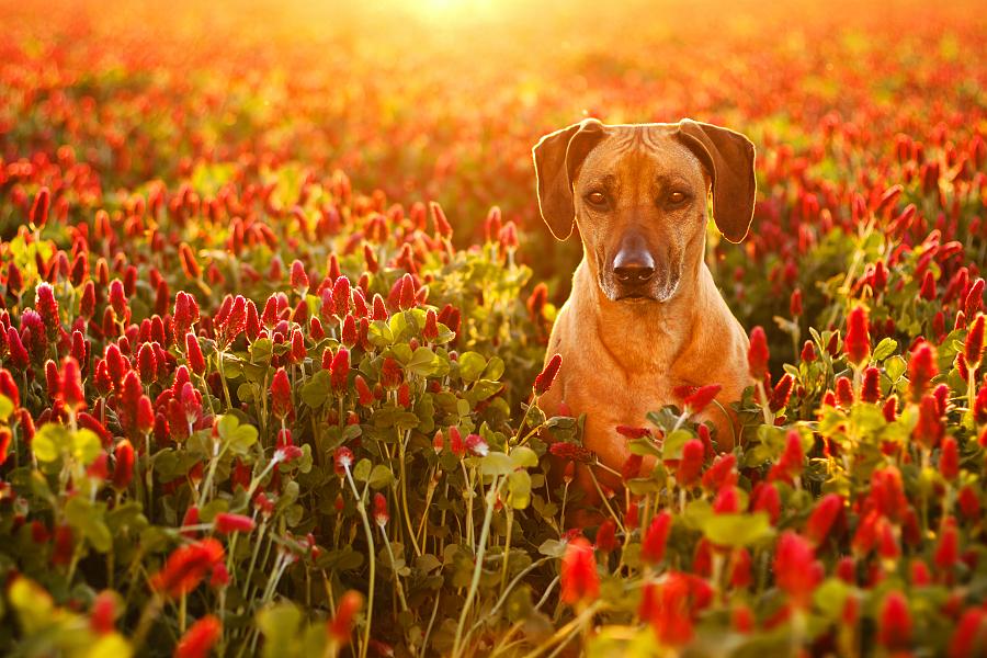 by Lukáš Lang - Animals - Dogs Portraits ( #GARYFONGPETS, #SHOWUSYOURPETS,  )