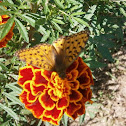 Butterfly and flover