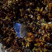 Biodiversity in Oregon