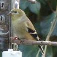 Birds of East Brunswick, NJ