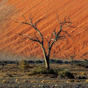 Tree Skeleton by Johan Jooste Snr - Nature Up Close Trees & Bushes ( namib desert, dry, desert, tree, dune, namibia )