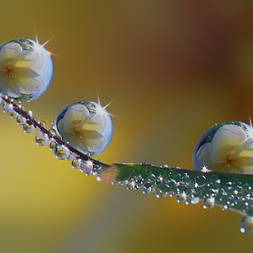 :: Shine and reflection :: by Dedy Haryanto - Nature Up Close Natural Waterdrops