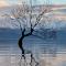 S Lonely Tree Of Lakw Wanaka b July 2014 copy.jpg