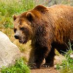 Bear Hunter 2015