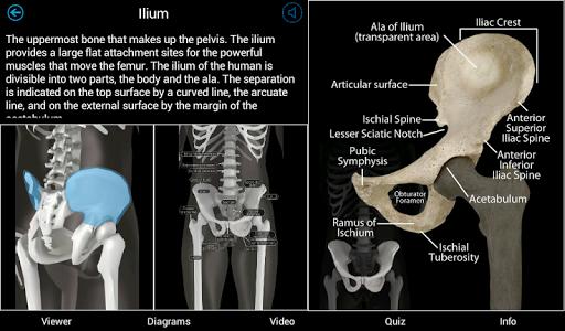 【免費醫療App】Skeletal Anatomy 3D-APP點子