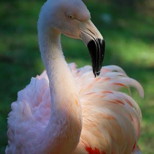 2014-10 (NC Zoo) 189.JPG