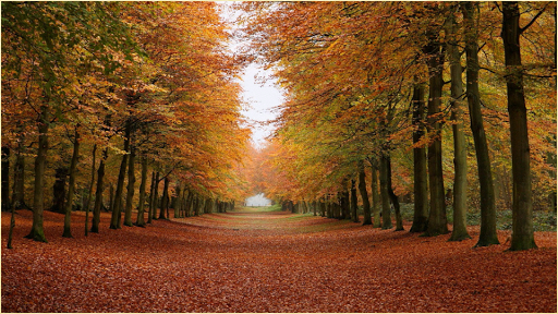 【免費攝影App】森林背景-APP點子