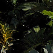 So FL Tropical Plants/Trees