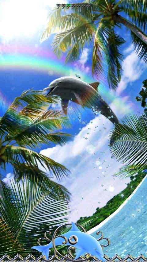 Dolphin Rainbow- screenshot