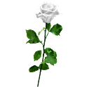 Flower White Rose Sticker logo