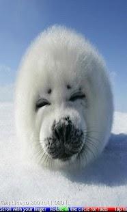 Wild Animals of the Arctic 2- screenshot thumbnail