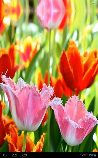 無料个人化Appの3D Fascinating Tulips Free 記事Game