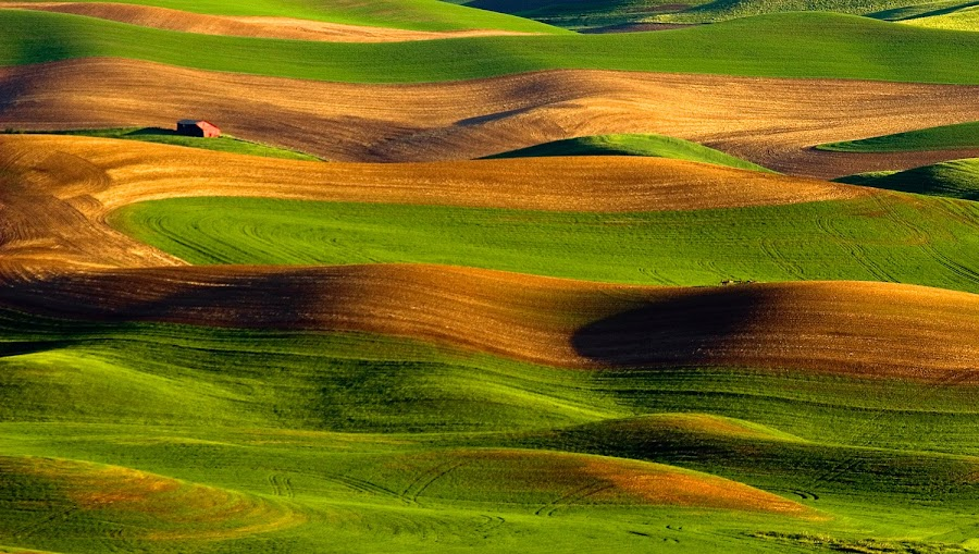 Red barn in Palouse hills by Gale Perry - Landscapes Prairies, Meadows & Fields ( , renewal, green, trees, forests, nature, natural, scenic, relaxing, meditation, the mood factory, mood, emotions, jade, revive, inspirational, earthly )