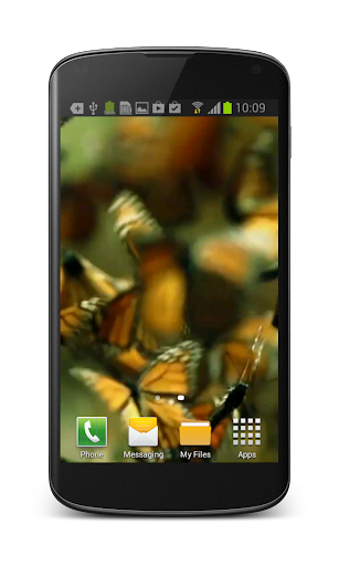 Butterfly Live Video Wallpaper