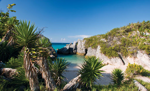 Jobsons-Cove-Bermuda - Jobson's Cove, Bermuda, is a great area to explore.