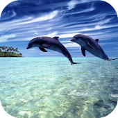 Magic Dolphins Live Wallpaper