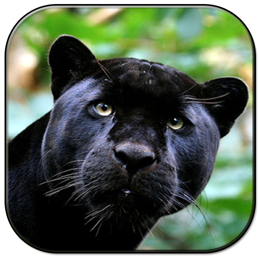 ブラックパンサー 個人化 LOGO-玩APPs