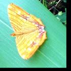 Common Maplet