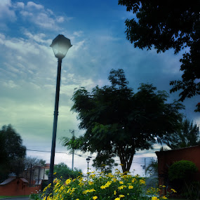 Amanecer by Jorge Madrigal - City,  Street & Park  City Parks ( nature, sunshine, sunrise, landscape, flower, city )