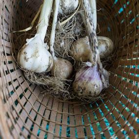 Garlic basket by Amy Woldrich - Food & Drink Fruits & Vegetables ( organic, garlic, food,  )