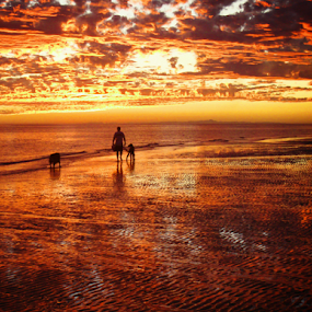 Walking into the Sunset by Cheryl Nestico - Landscapes Sunsets & Sunrises ( dogs, sunset, beach, , silhouette )