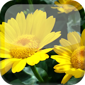 Sunflower S5 Live Wallpaper