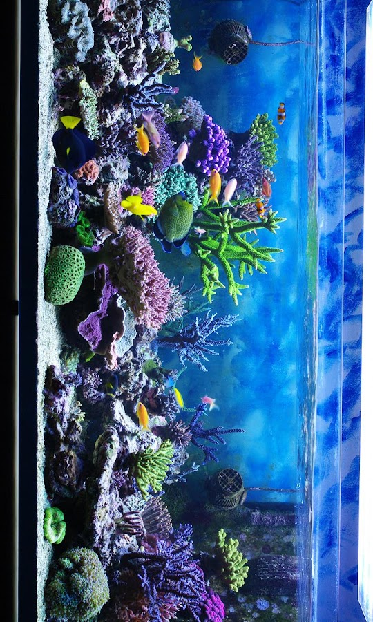 Hd Aquarium Android Apps On Google Play