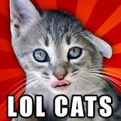 LOLCats - Funny cats pictures