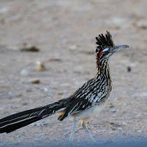 New Mexico's Wildlife