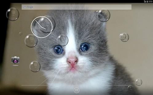 Котенок в пузырьках