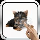Pretty York Terrier Wallpaper icon