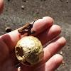 Oak Wasp Gall