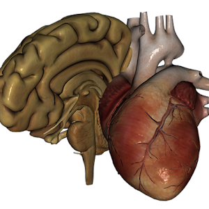 Organs 3D (Anatomy) for Android