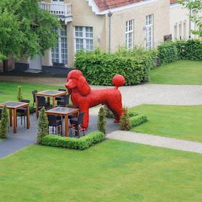 Red Dog by Pavel Laberko - City,  Street & Park  City Parks ( tables, park, grass, dog, picnic table, Urban, City, Lifestyle )