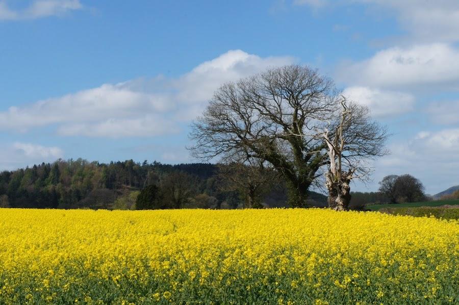 Yellow! by Diane Dunn - Landscapes Prairies, Meadows & Fields